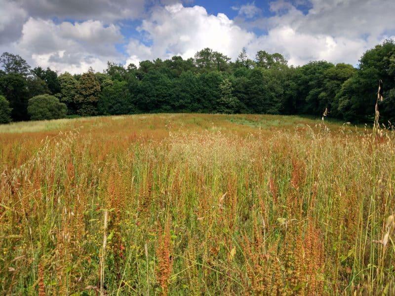 Melrand Forest
