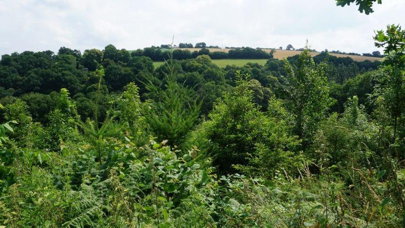 Playben Forest